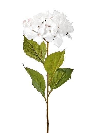 The Mia Fiorina Ortanca (Dal) Beyaz Beyaz